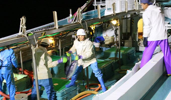 宮崎県の「一本釣り初ガツオ」