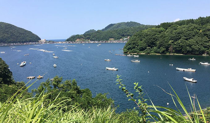 福井県日向の「甘鯛」